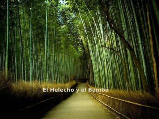 EL_HELECHO_Y_EL_BAMBU.pps
